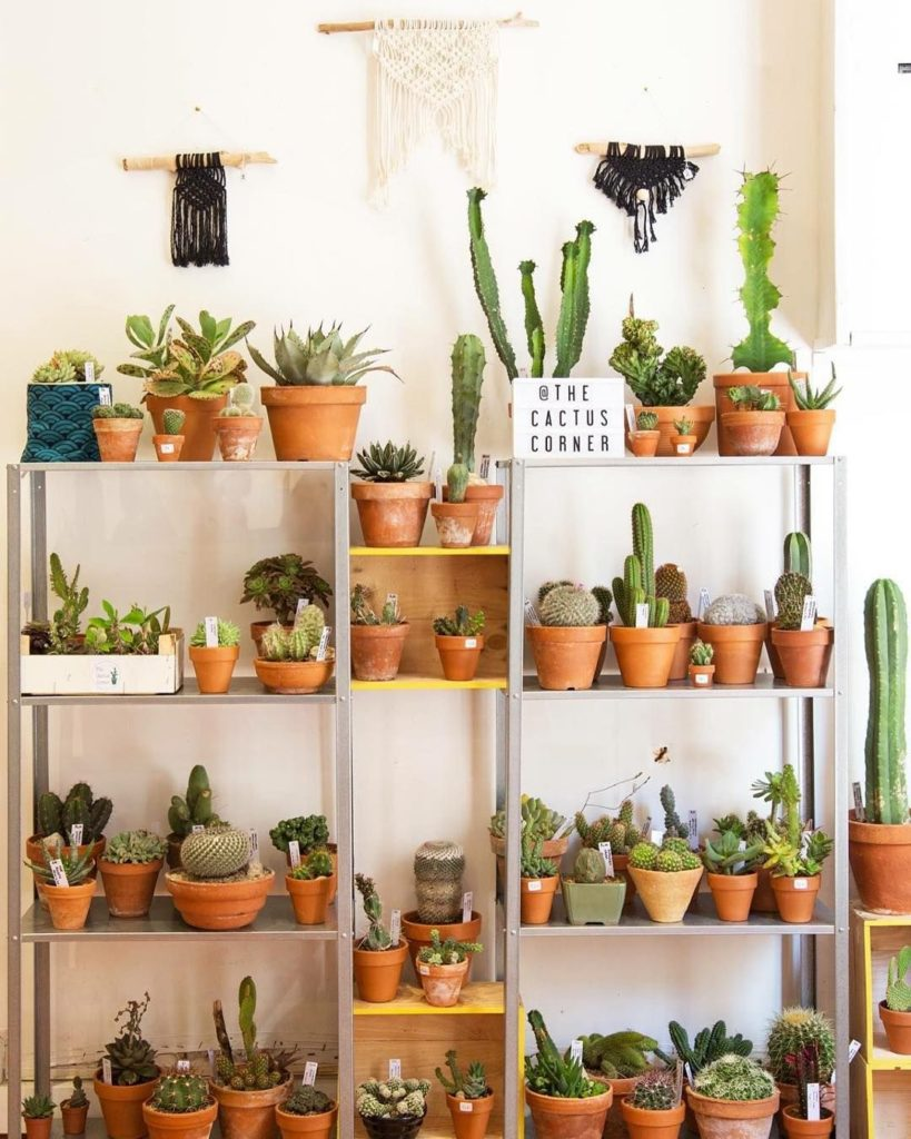 Crédit Photo : The Cactus Corner Toulouse